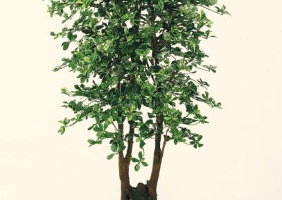 Büsche Beispiel 4 (Black Olive)