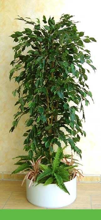Büsche Beispiel 2 (Ficus, grün)