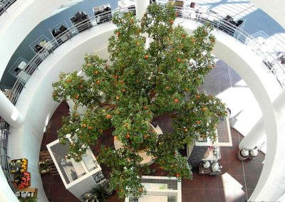 Großer, dekorativer, künstlicher Apfelbaum Ulmer Möbelhaus