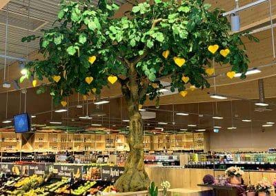 """Eine """"Marktlinde"""" (Baumkrone Ø 450 cm) bei EDEKA"""