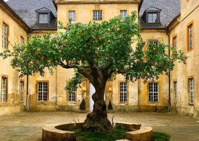 Künstlicher Apfelbaum (Baumkrone Ø 600 cm) für einen Filmdreh.