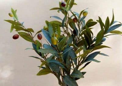 Zweig Beispiel 8 (Olive mit Früchten)