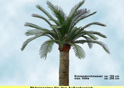Phönixpalme (Krone ⌀ ca. 150 cm, Höhe ca. 250 cm)