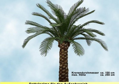 Dattelpalme (Krone ⌀ ca. 150 cm, Höhe ca. 250 cm)