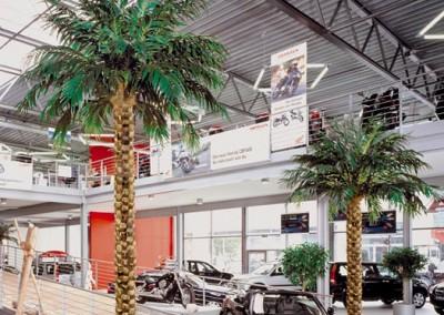Kunstpalmen (Areca) in einem Autohaus
