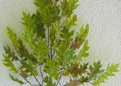 Zweig Beispiel 2 (Sommereiche)